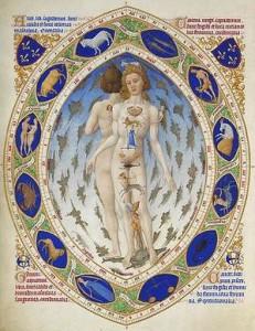 Zodiac anatomy 2